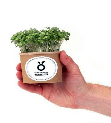 Grown_products_2021_13_vrijst